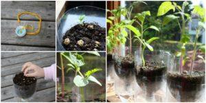 DIY Self-Watering Pots Step by StepTutorial