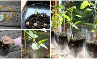 DIY Self-Watering Pots Step by StepTutorial