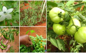 diy4ever- How to DIY Small Kitchen Garden in Your Backyard