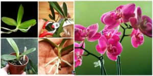 diy4ever-How to Grow Orchid at Home